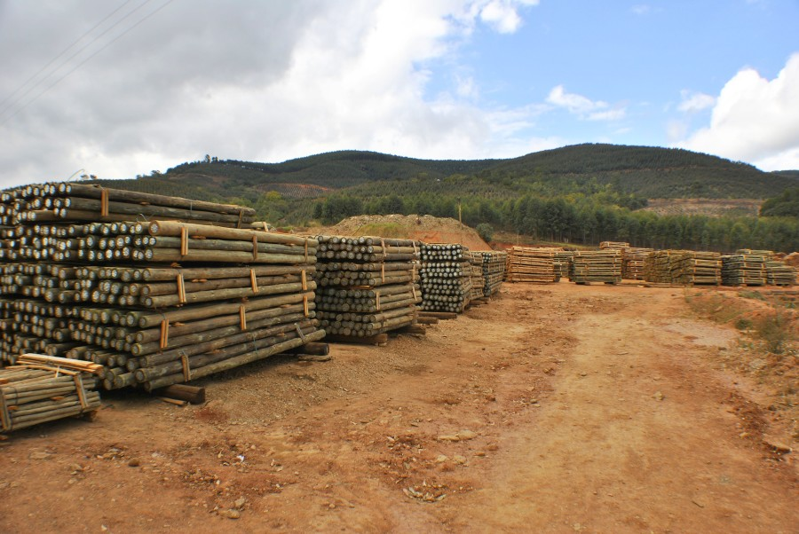 CCA Treated Timber
